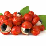 Extratos vegetais: fontes naturais de antioxidantes para a indústria alimentícia