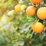 Aromas naturais: uma forte tendência de mercado
