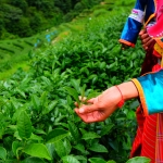 Botânicos em evidência crescente no mercado global de alimentos